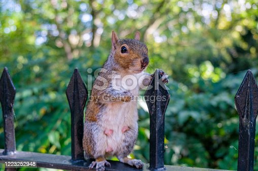 Squirrel standing up like a person