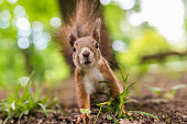 Cute squirrel standing to attention