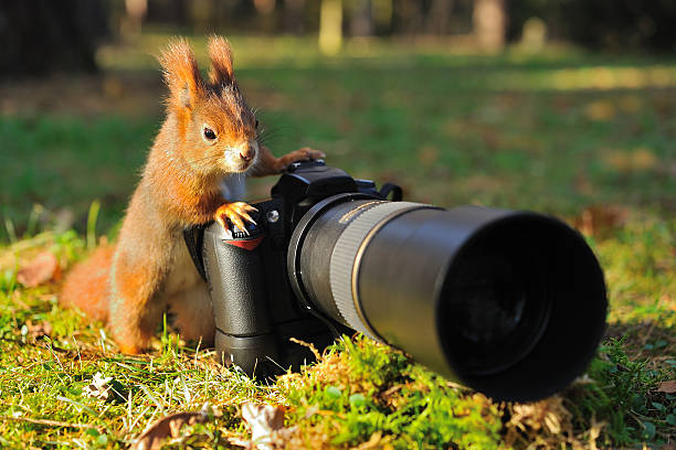 Squirrel with big professional camera stock photo
