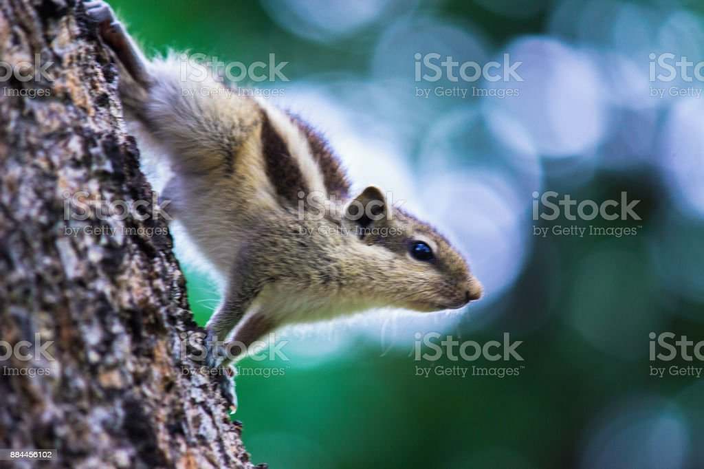 Squirrell stock photo