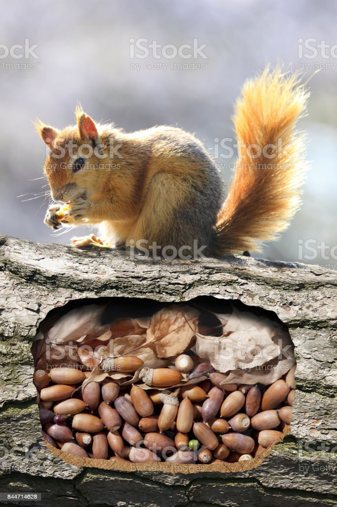 Squirrels burrow stock photo