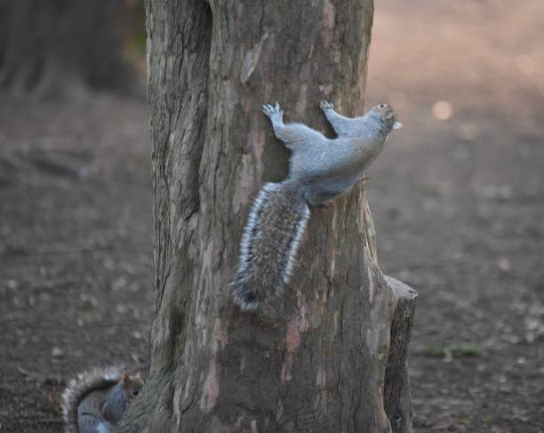 Squirrels hiding stock photo
