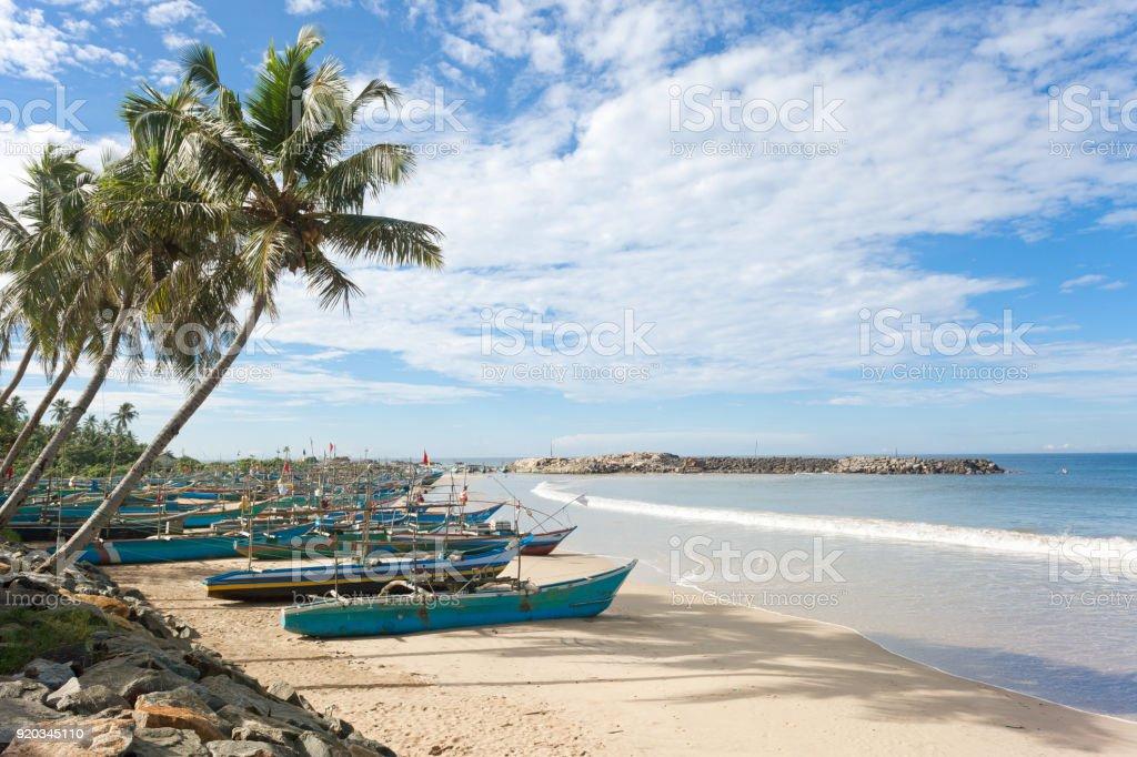 Sri Lanka, Dodanduwa - Palmen an der Küste von Dodanduwa – Foto