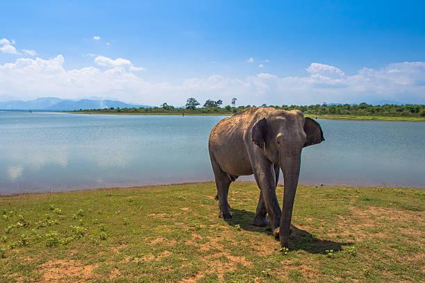 Sri Lanka National Park foto