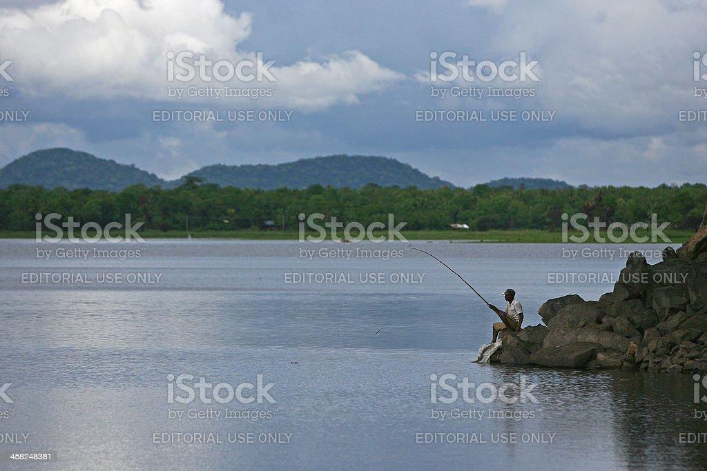 Sri Lankan fishes stock photo