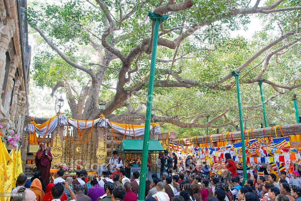 Sri Maha Bodhi Tree. Anuradhapura, Sri Lanka stock photo