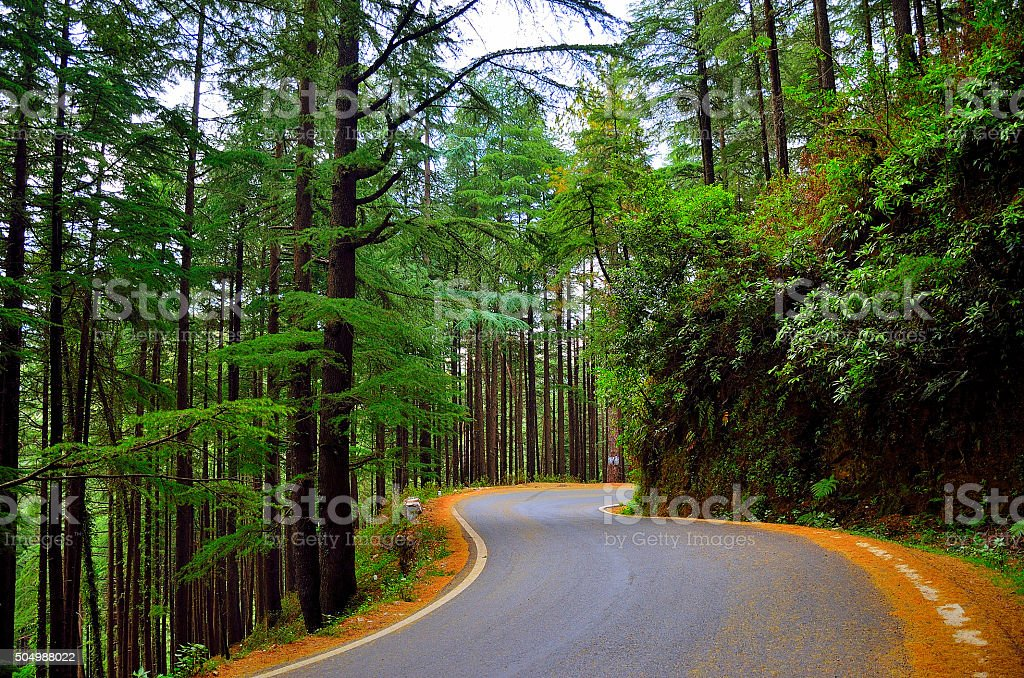 S-shaped road stock photo