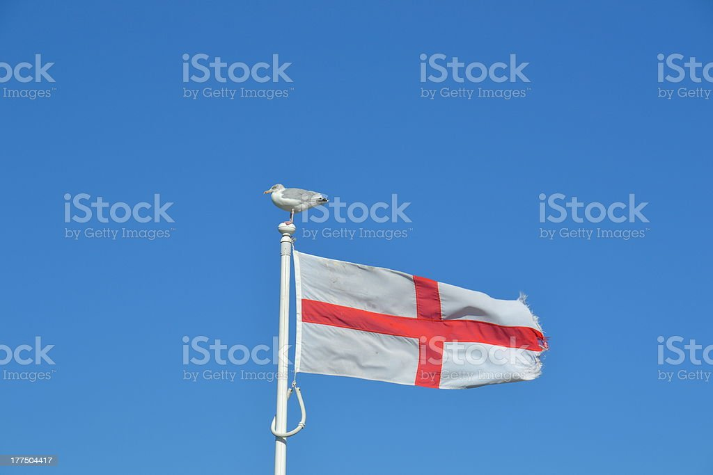 St George's Cross Flag With Seagull royalty-free stock photo