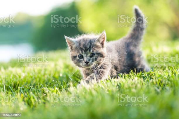 St gr kattunge smyger i det hga grset picture id1094023820?b=1&k=6&m=1094023820&s=612x612&h= oh7t38ncjoglr7 s5mm2qymkvhccqywhlthowminli=