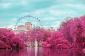 London in Pink: Simulated color infrared film. London Eye view from St James Park.