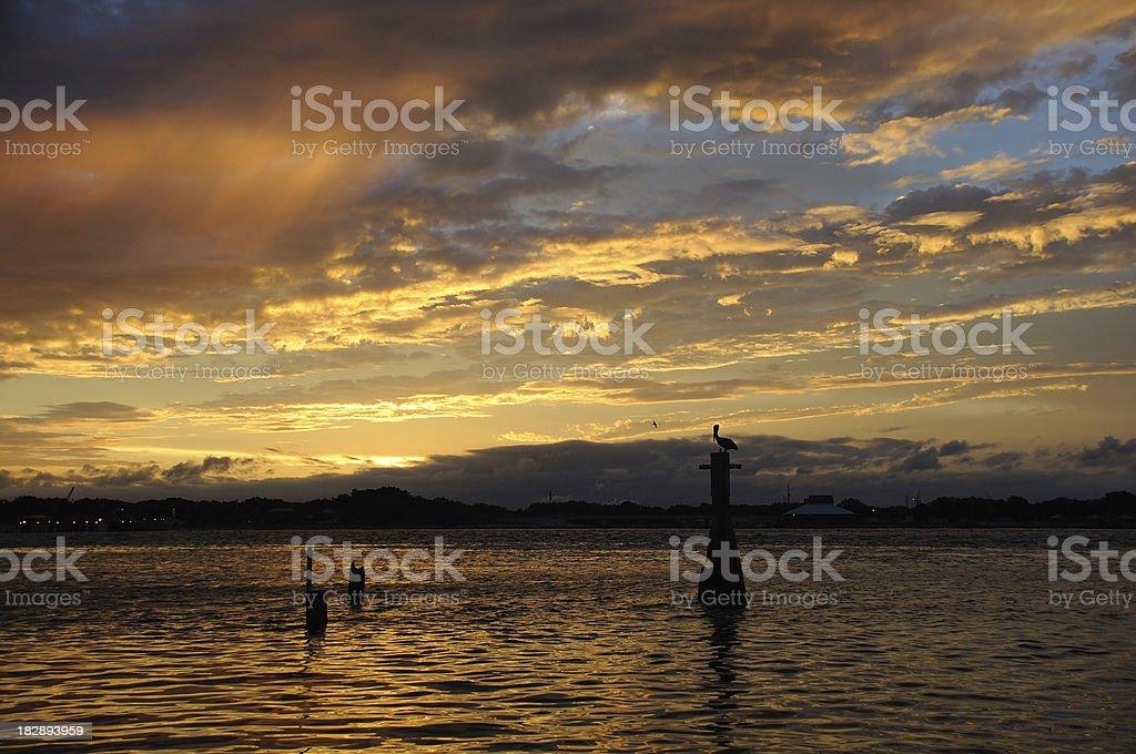 St. John Pelican stock photo