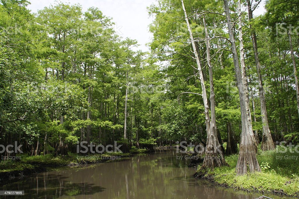 St Johns River in Florida stock photo