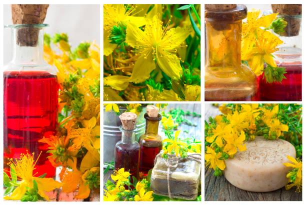 St John's wort collage stock photo