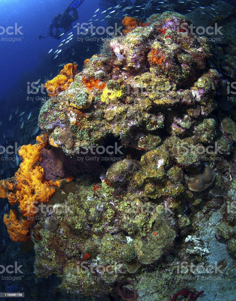 St Lucia Reef scene royalty-free stock photo