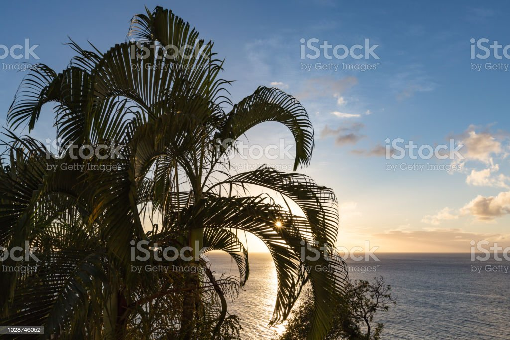 St Lucia Sunset through the palm stock photo