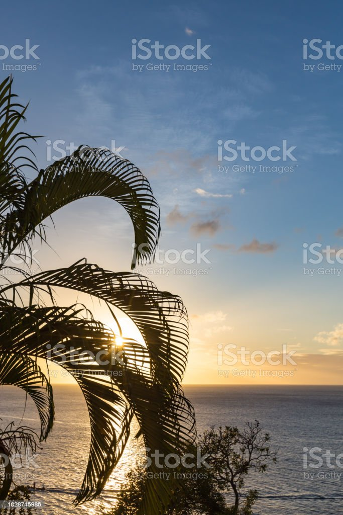 St Lucia Sunset through the palm tree - vertical stock photo