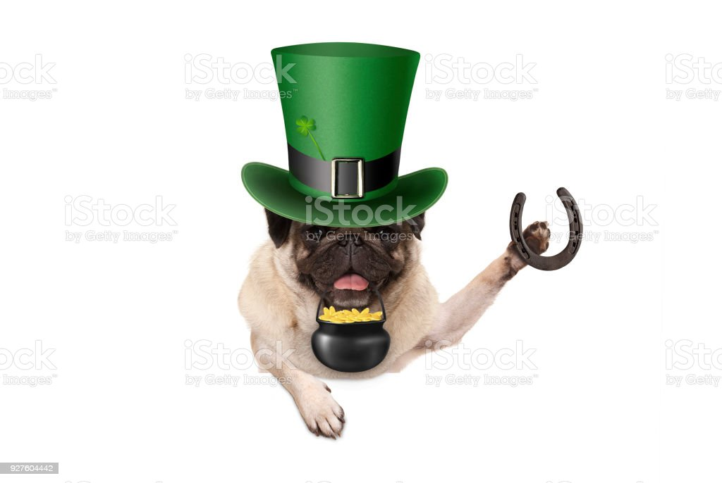 st patrick day pug puppy dog with green leprechaun hat, holding horseshoe and pot with golden coins stock photo