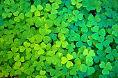 St. Patrick's Day Clover Leaves Texture