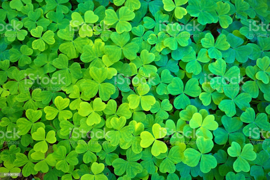 St. Patrick's Day Clover Leaves Texture stock photo