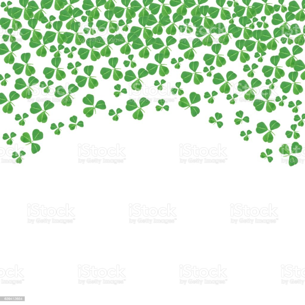 St Patricks Day curved top border of shamrocks over white stock photo