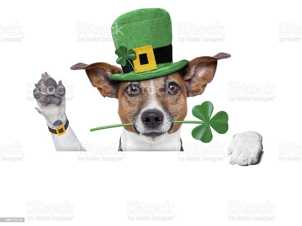 st. patrick's day dog stock photo