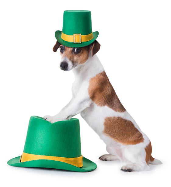 st. patrick's day party puppy - luck of the irish stock photos and pictures