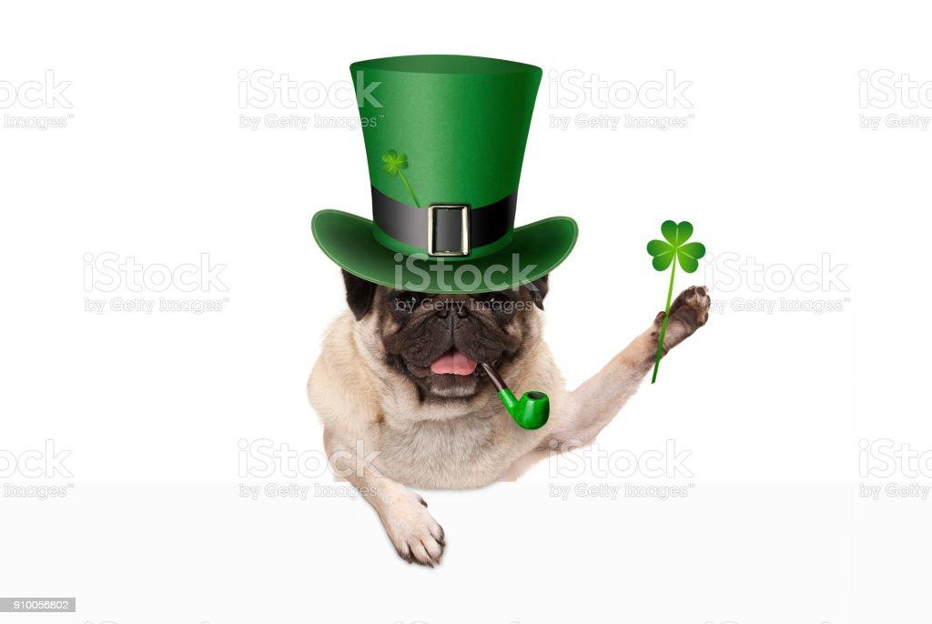 St patricks dag pug puppy hondje met groene kabouter muts en pijp, bedrijf in shamrock klaver foto