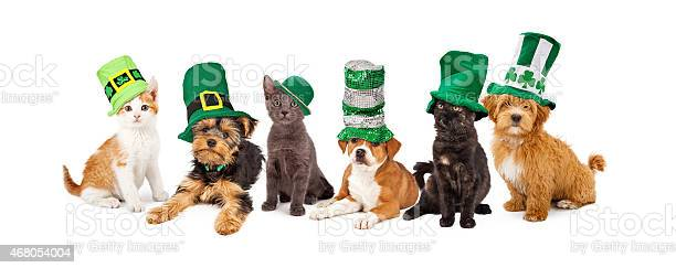 St patricks day puppies and kittens picture id468054004?b=1&k=6&m=468054004&s=612x612&h=oevtmsfmip w dozfnl9yobol5u4rsmqeb0xebmp8nq=