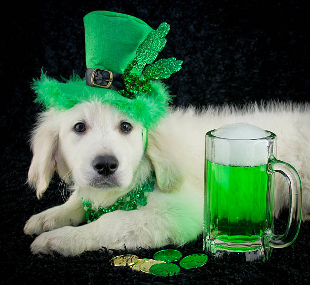 St. Patrick's Day Puppy stock photo