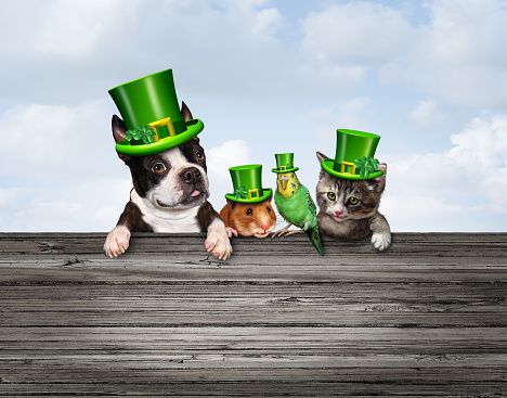 St Patricks or happy saint patrick day pet celebration sign as a March traditional green shamrock decorated pets with 3D illustration elements.