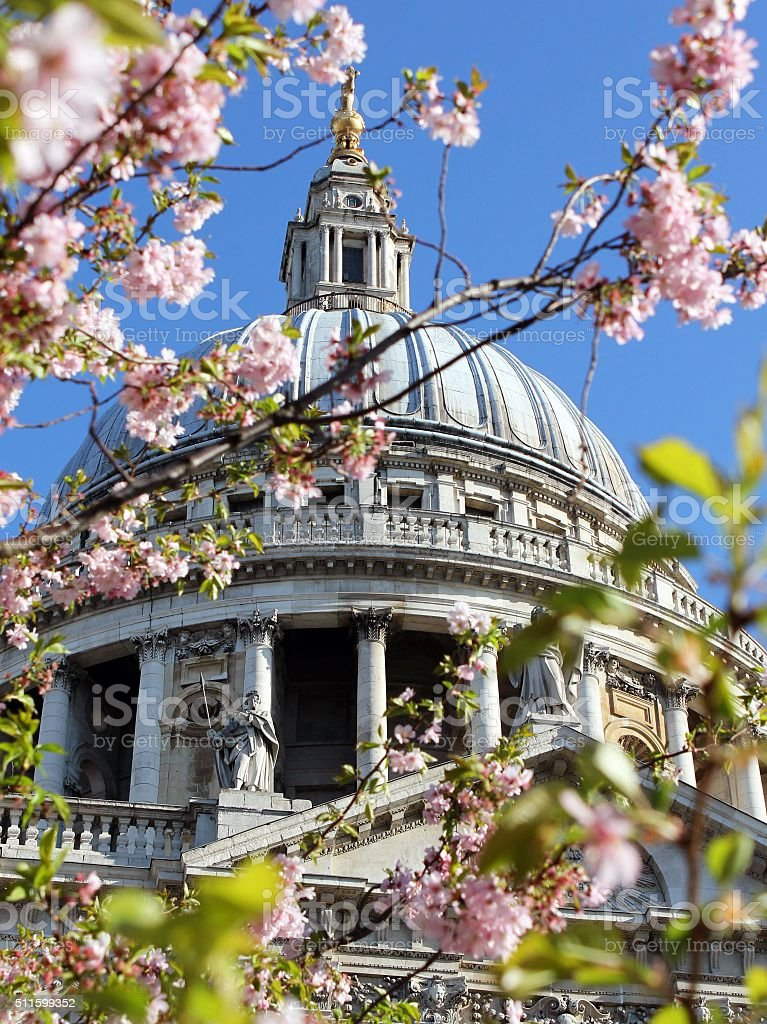 St Paul's in bloom stock photo