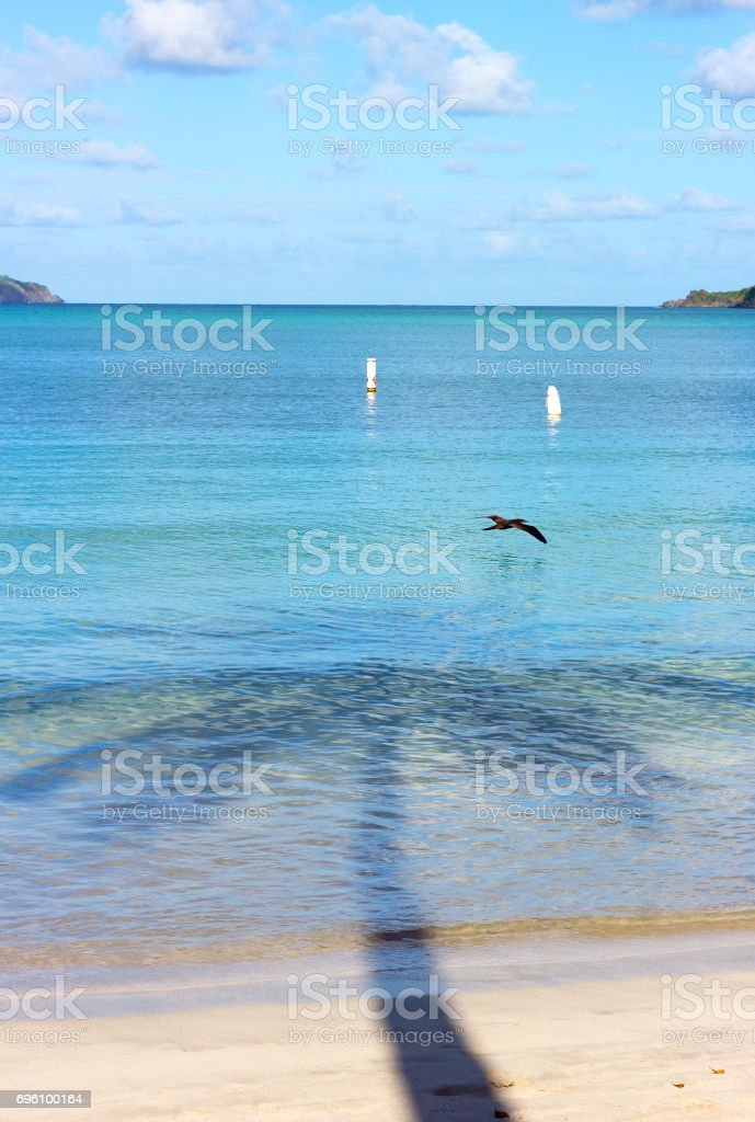 St Thomas Island, Magens Bay beach with flying bird early in the morning. stock photo