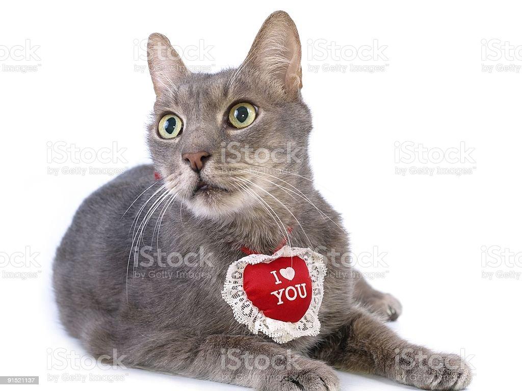 St Valentine's Day cat royalty-free stock photo