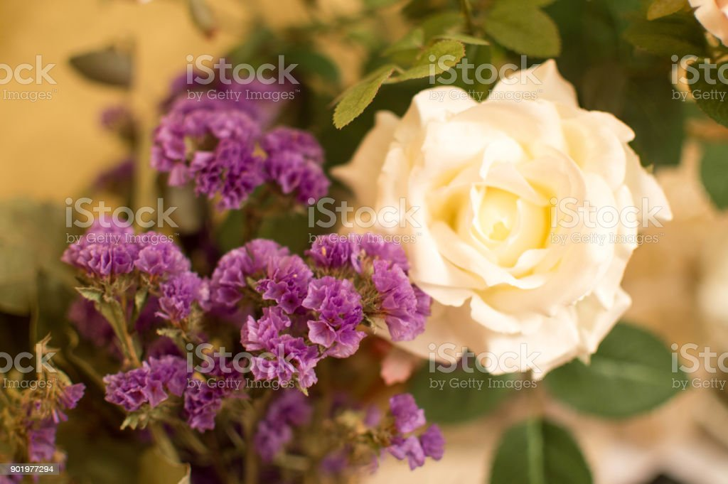 St Valentine's Day Impressive White Rose & Bouquet Of Violets, Botany February 14th. stock photo