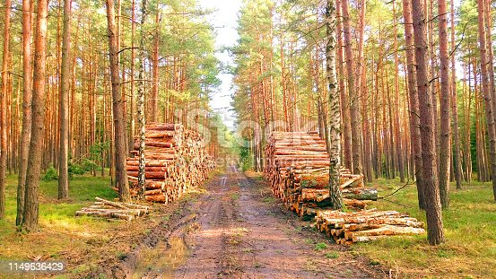 Stack a logs in pine forest. Timber and Firewood as a renewable energy source. Heavy industry. Fuel and power generation. Renewable energy and sustainable development theme.