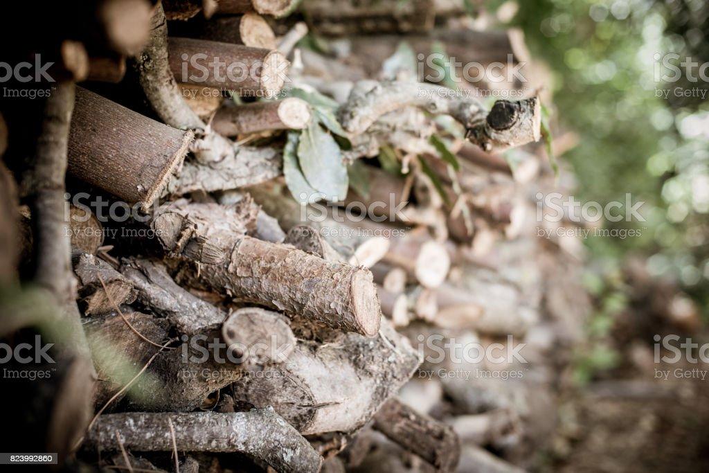 bulto en un tronco