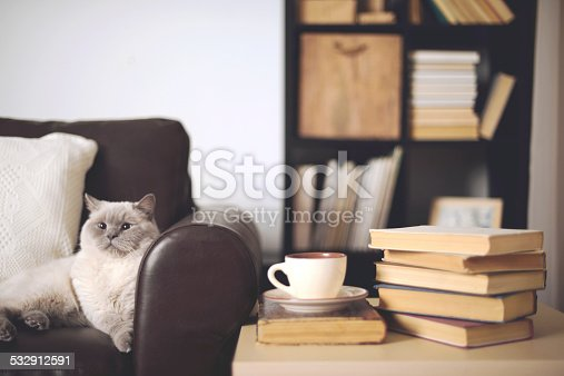 istock stack of books in home interior 532912591