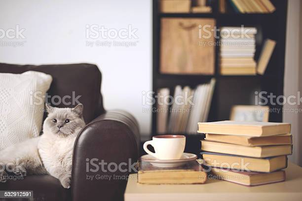 Stack of books in home interior picture id532912591?b=1&k=6&m=532912591&s=612x612&h=bwdia63zsw54dhaw razhjvdivfkktv6sgicfparjuu=