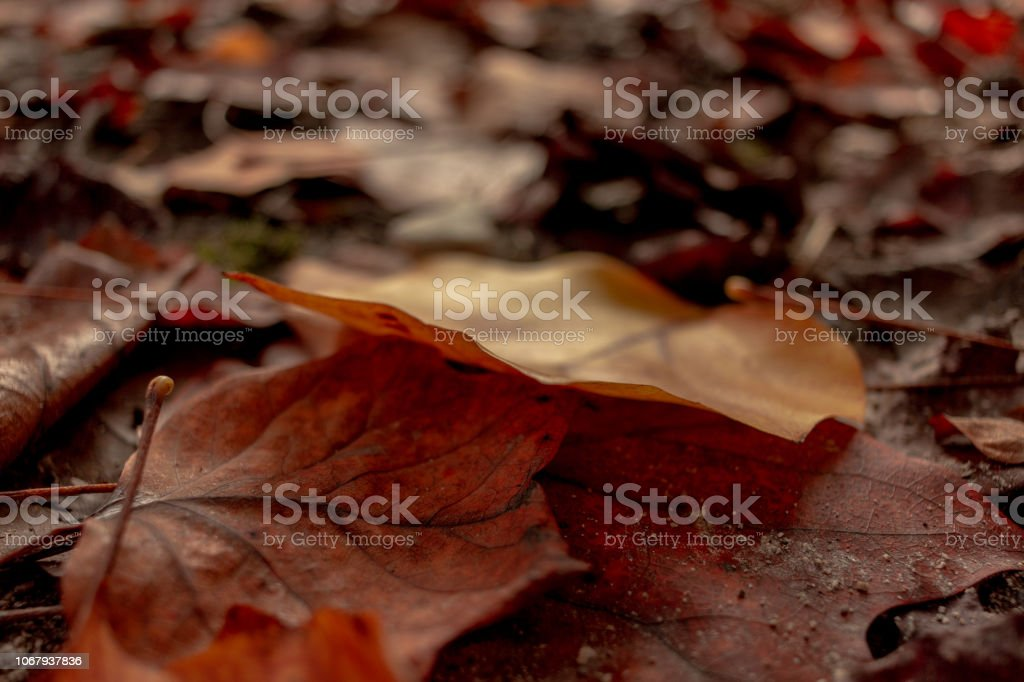 Stack of Brown Leaves - foto stock