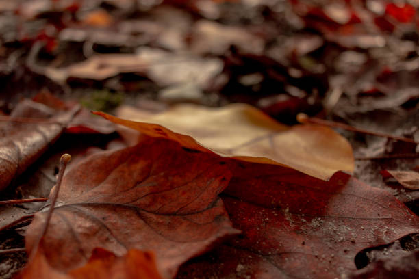 stack of brown leaves - monica pirozzi foto e immagini stock