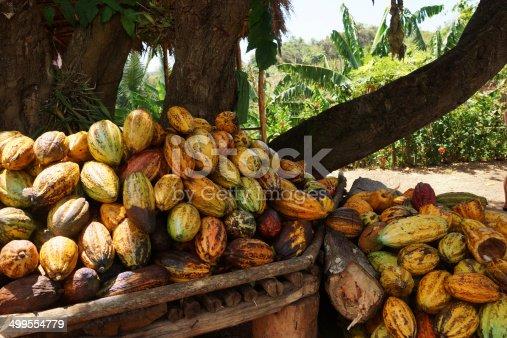 Cocoa pods from Samana, Dominican republic