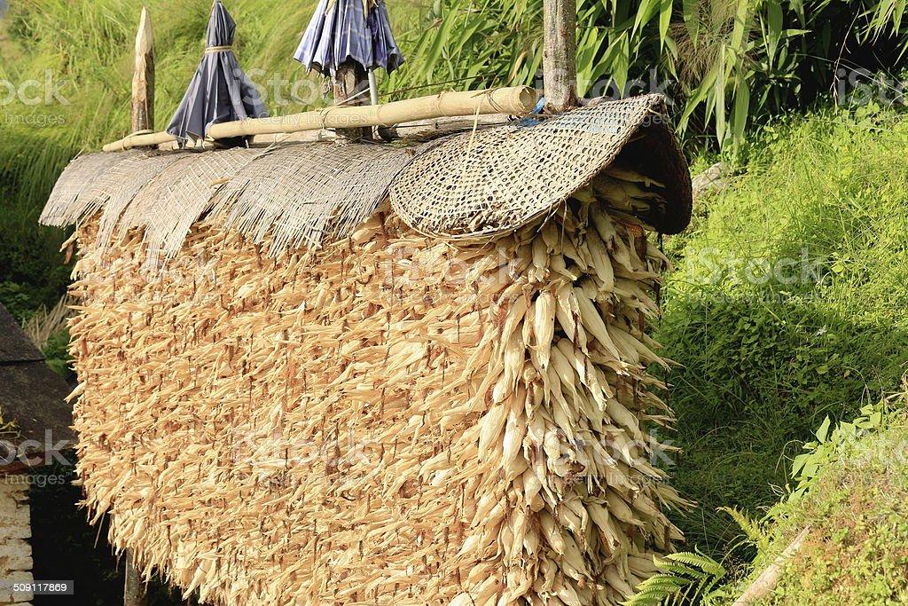 Stack of corn cobs. Tolka-Landruk-Nepal. 0564 royalty-free stock photo