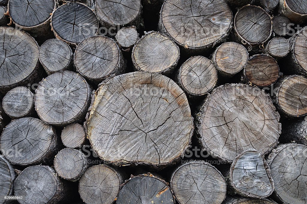 Stack of dry birch firewood stock photo