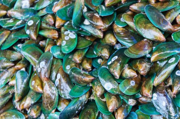 stapel von frischen muscheln an fisch markt steg. für meeresfrüchte, essen, küche, textur und hintergrund. - weichtiere stock-fotos und bilder