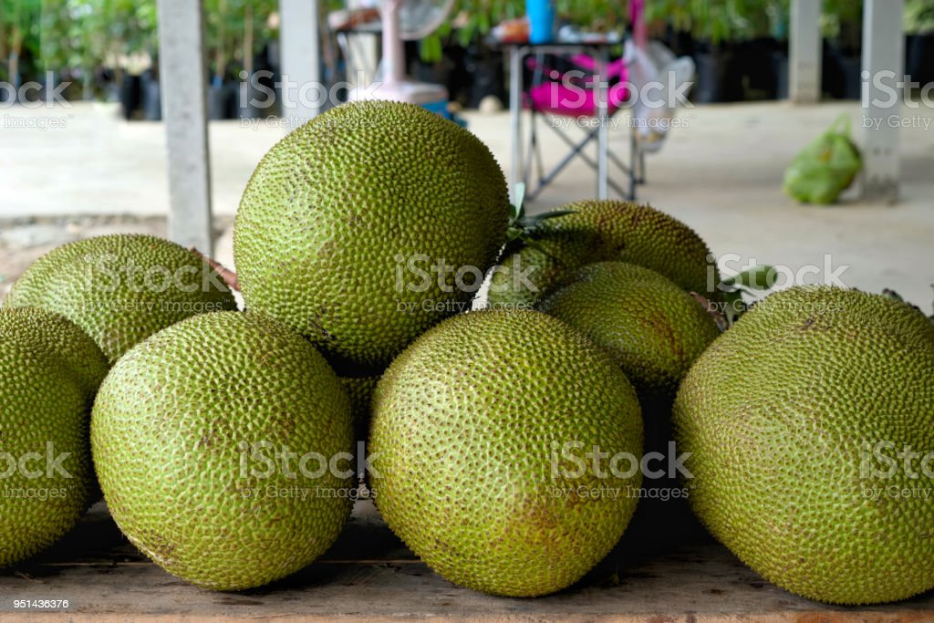A stack of jackfruit in thailand. also known as jack tree, fenne, jakfruit, or sometimes simply jack or jak, is a species of tree in the fig, mulberry, and breadfruit family (Moraceae) native to southwest India. stock photo