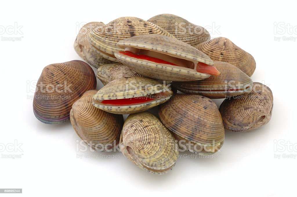 Stack of live clams royalty-free stock photo