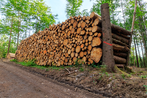 Stack of logged trees waiting for transport