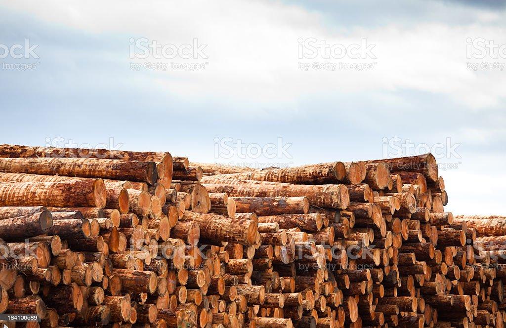 Stack of Logs at Lumber Yard royalty-free stock photo