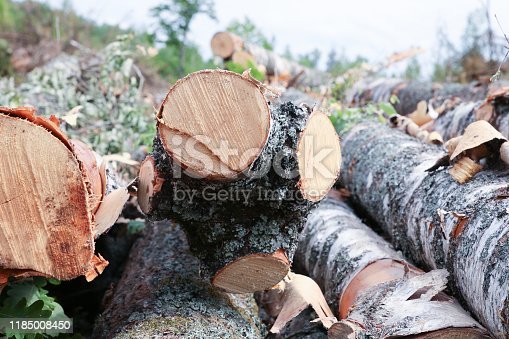 stack of logs close-up birch saw cut annual rings pattern light beige