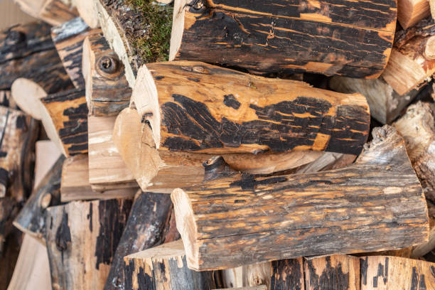Stack of Logs for firewood drying cut with chainsaw. Northern California stock photo
